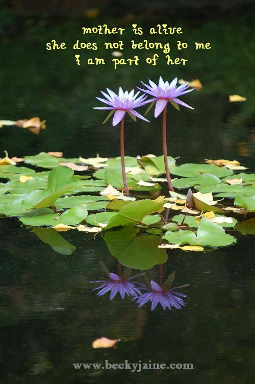 water_lillies_beckyjaine_2007