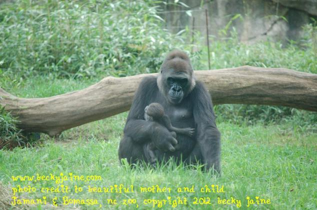 mother and child, gorillas nc zoo