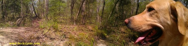 woods 2015 joyfuel